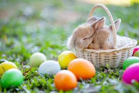 Which Stores Are Open On Easter Sunday 2019 Walmart Home Depot Sears And More With Images Easter Pictures Easter Bunny Pictures Easter Images