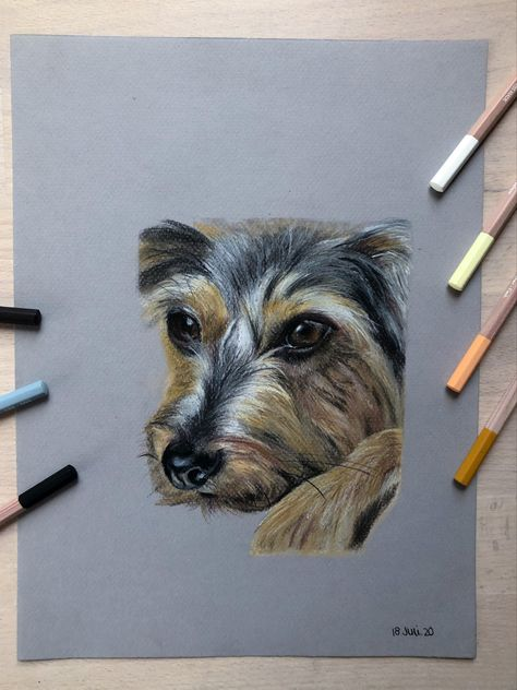 Pastellzeichnung In 2020 Pastellzeichnung Hundezeichnung Pastell