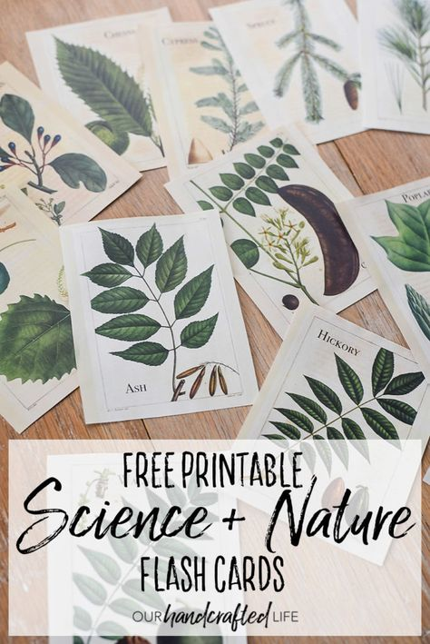 Encourage kids to explore and discover the world around them with these Vintage Inspired Science and Nature Flash Cards. If you are homeschooling or unschooling, these vintage Science flash cards would work perfectly with the Charlotte Mason curriculum or really any science and nature study. Download and print bird, leaf and tree, and flower flash cards for kids. Vintage Science and Nature Flash Cards - Our Handcrafted Life