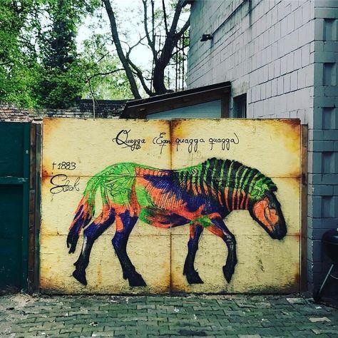 Das Quagga Lebt Quagga Pferd Horse Equus Ausgestorben