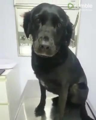 Dog Getting A Shot At Vet S Office Is The Best Patient Ever
