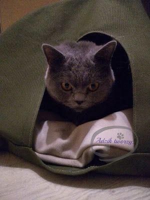 DIY: Namiot dla kota i mruczek schowany jak się patrzy