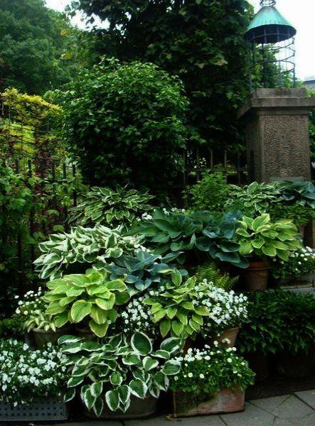Central Brighton Family Garden For Mum And Teenage Boys Small Backyard Landscaping Family Garden Garden Trampoline