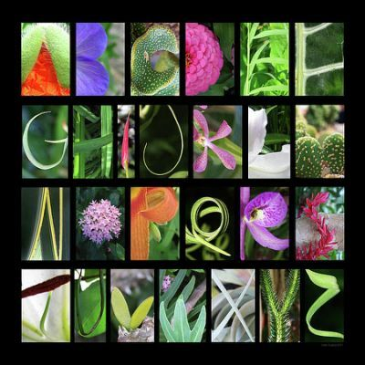 Alphabet In Nature | Alphabet photography