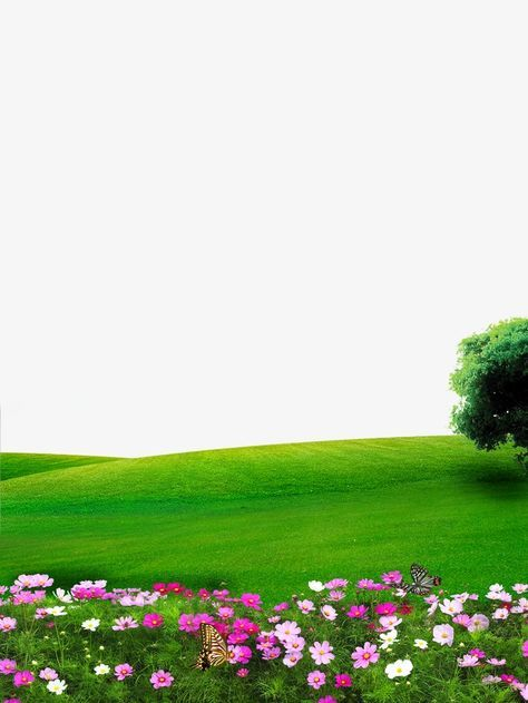 nature flowers lawn png