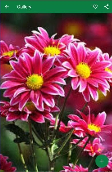 Wallpaper Gambar Bunga Cantik Wallpaper Gambar Bunga Cantik For Android Apk Download 50 Gambar Bunga Mawar Tercantik Di Dunia Wa Di 2020 Tanaman Bunga Tanaman Semak
