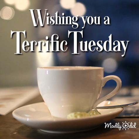 Wishing you a terrifc Tuesday. #tuesday #video #greeting #morning #goodmorning #inspiration #mornings #quotes #sayings #videos #inspirational #friends #friendship #madlyodd