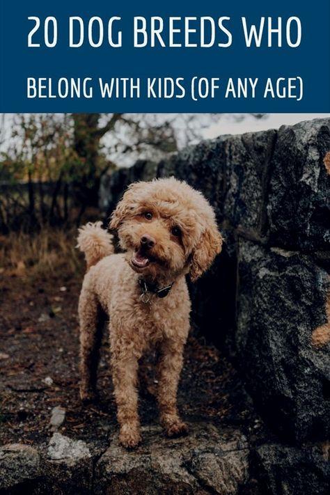 Pin On Dog Training Supplies