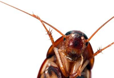 Natural Born Pest Killers   Planet Natural