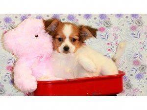 Pet Stores In Iowa City Pet Supplies Buy Puppies In Iowa City Pet Suppilies Dog Training In Iowa City Goldenretrieverpup Dog Behavior Dog Behavior Problems