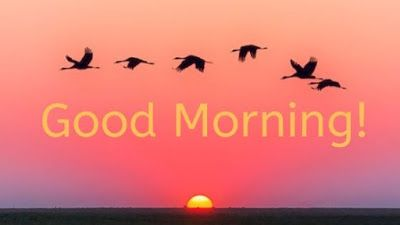 100 Good Morning Bird S Images And Quotes For Free Download Good Morning Good Morning Images Image
