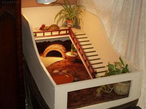 Indoor house ideas for your tortoise :)