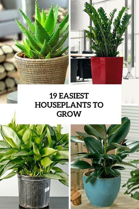 19 Easiest Houseplants To Grow Cover Indoor Plants Easy Growing Plants Indoors Easy Plants To Grow