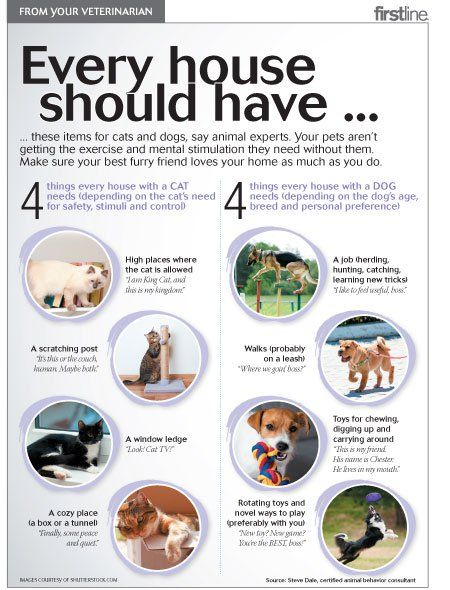 Every Home With A Pet Should Have These 4 Things Pet Health