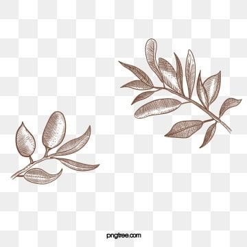 Olive Tree Png Images Vector And Psd Files Free Download On Pngtree Shadow Painting Olive Tree Tree Logo Design