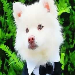 لعبة حيوانات مضحكة للأطفال Funny Baby Animals Animals Dogs Husky