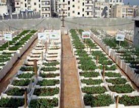 طرق زراعة اسطح المنازل Cultivation Method Rooftops Dawa09 S Blog In 2020 Hydroponic Gardening Vertical Garden Hydroponics