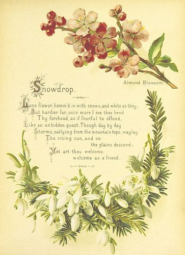 British Library Digitised Image From Page 15 Of The Artistic Language Of Flowers With Illustrations Language Of Flowers Flowers Flower Meanings
