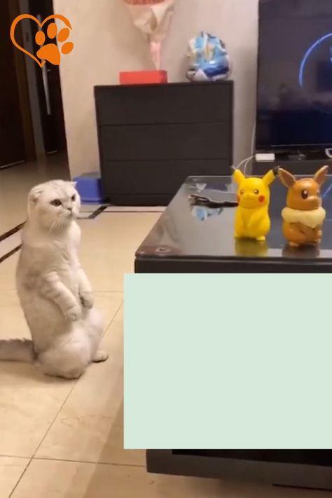 Quand Miaouss rencontre Pikachu, le choc des cultures est énormes ) Chat - Pokemon - Pikachu - Chaton - Mignon