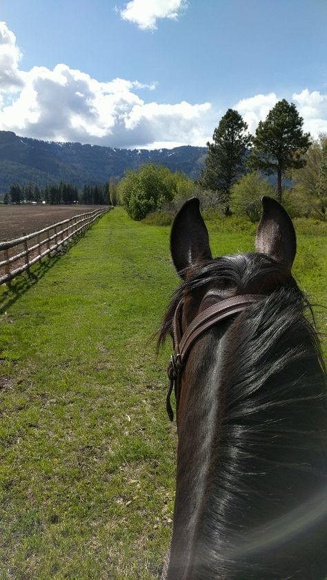 My girl Britches and some beautiful blue skies. Cute Horses, Pretty Horses, Horse Love, Horse Photos, Horse Pictures, Trail Riding, Horse Riding, Cavalo Wallpaper, Foto Cowgirl