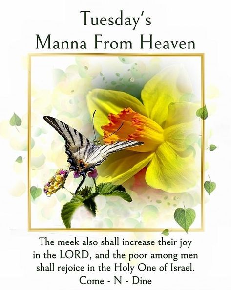 30 Manna From Heaven ideas in 2021 | heaven, manna, blessed