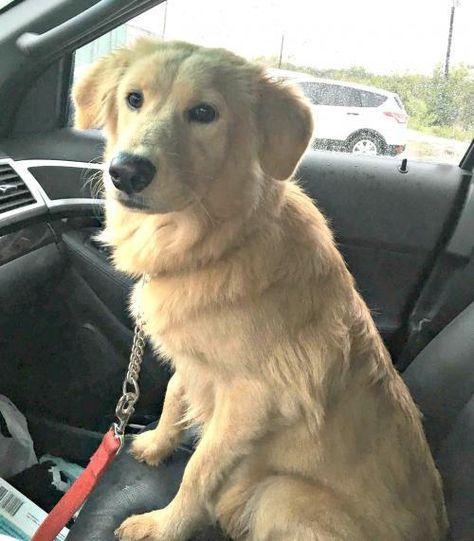 Nadia 0724 Pet Adoption Animal Welfare Quote Animal Rescue