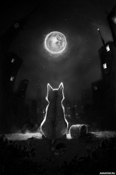 Siluety Koty Luna Skachat Kartinku Na Avu 500x750px Luna