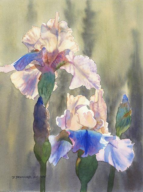 Original Blue Iris 1 Nature Morte Fleurs Et Aquarelle