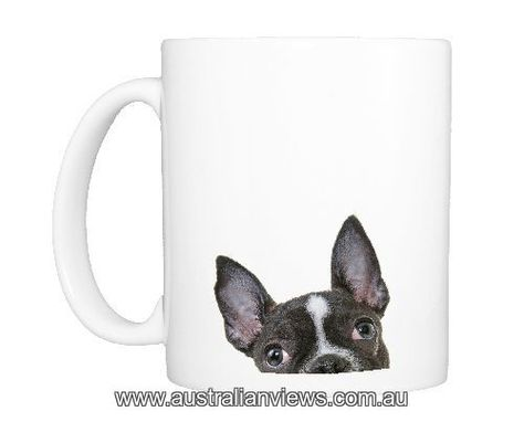Print of Headshot of a French Bulldog Puppy looking at the camera on a white backdrop