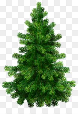 Christmas Tree Branch Png Download 1200 802 Free Transparent Fir Png Download C Christmas Tree Branches Cartoon Christmas Tree Christmas Tree Background