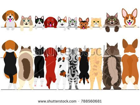 Standing Small Dogs And Cats Front And Back Border Set Dog Illustration Dog Cat Cat Illustration