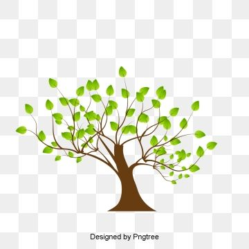Tree Tree Clipart Cartoon Tree Vector Tree Png Transparent Clipart Image And Psd File For Free Download Cartoon Trees Vector Trees Tree Clipart