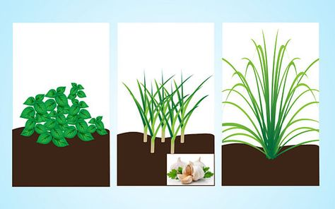 Grow herbs that repel mosquitoes. In addition to having the ability to eat them, herbs such as rosemary, basil, lemongrass, and garlic will naturally keep mosquitoes away.