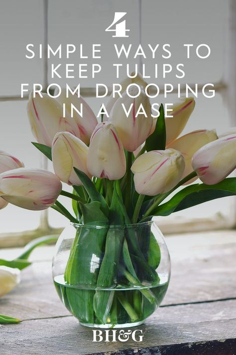 To keep beautiful blooms looking fresh for as long as possible, you've probably heard about home remedies such as adding a dash of bleach or dropping a penny into the water. While those methods aren't actually very effective, here are a few proven ways to keep your tulips standing straight and looking gorgeous #flowerfacts #tulipfacts #ghowtokeeptulipsfromdrooping #bhg