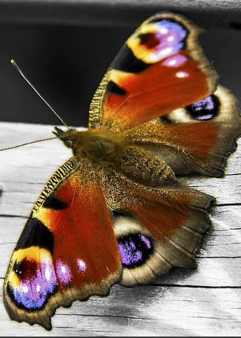 Butterfly Greeting Card featuring the photograph Last Butterfly Of Summer by Paul Moore