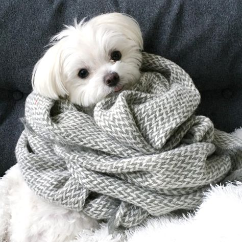 All Bundled Up...
