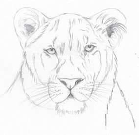 Comment Dessiner Le Visage D Un Lion Ou D Une Lionne Au Crayon Facilement Comment Dessiner Un Lion Dessin Lion Dessin