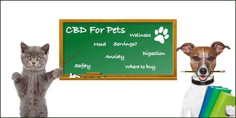 do drug sniffing dogs smell cbd oil