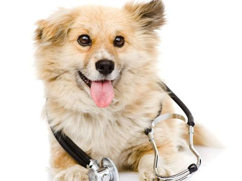 Paying Attention To The Wellness Of Your Pets Is Of Utmost Importance So That Serious Diseases Can Be Avoided Petterr Is A Well Kno Pet Wellness Pets Wellness