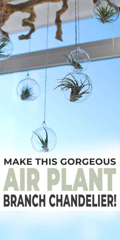 Make This Gorgeous Branch Chandelier Air Plant Display! • OhMeOhMy Blog