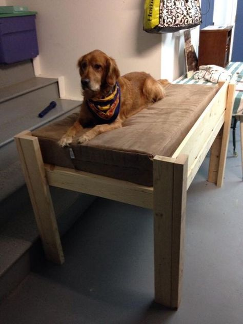 Dog Bed Wooden Dog Bed Diy Elevated Dog Bed Elevated Dog Bed