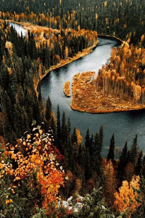 maureen2musings: Perks of being an autumn flowerannisellis