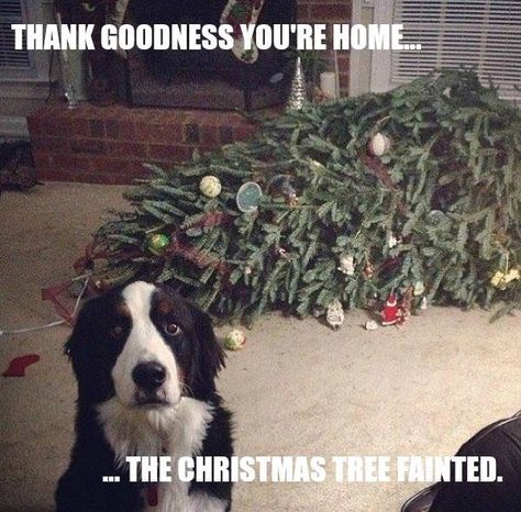 thank goodness you're home the christmas tree fainted - Google Search