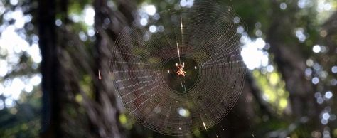 Regenwald: Vom Umgang mit Insekten