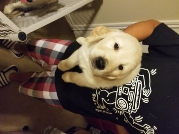 Litter Of 4 Golden Retriever Puppies For Sale In College Station