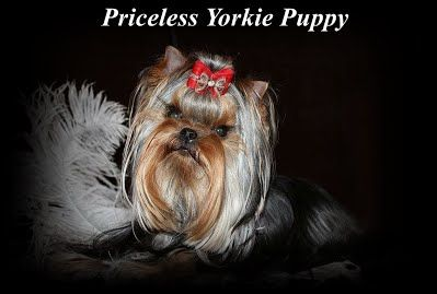 Exceptional Quality Is Not Expensive It S Priceless Akc Teacup