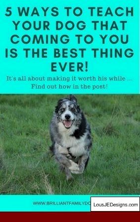 How To Train Your Dog To Be Good Off Leash And Pics Of Tips To