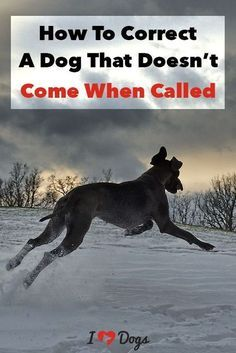 How To Correct A Dog That Doesn't Come When Called
