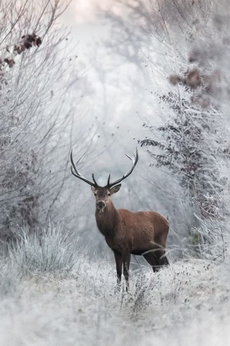 ღღ The Greenman, Cernunnos /Herne the Hunter. Deer in Winter. By Artist Nicolas Le Boulanger.