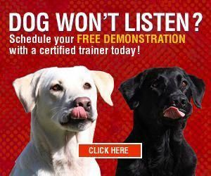 Need My Dog To Be My Partner Not A Pain Dog Training In